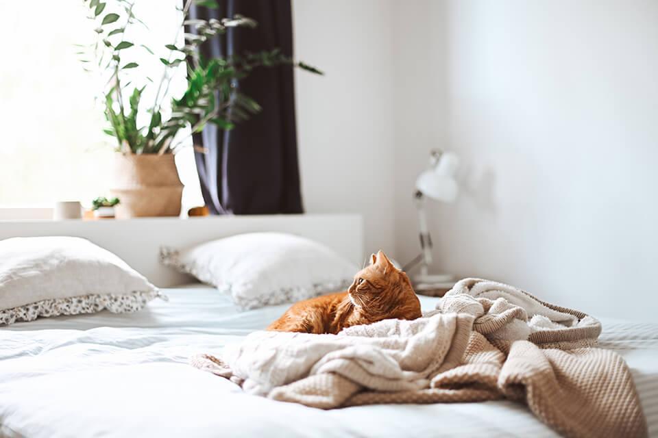 乳膠床墊厚度該怎麼選?專業床墊專家來告訴你!