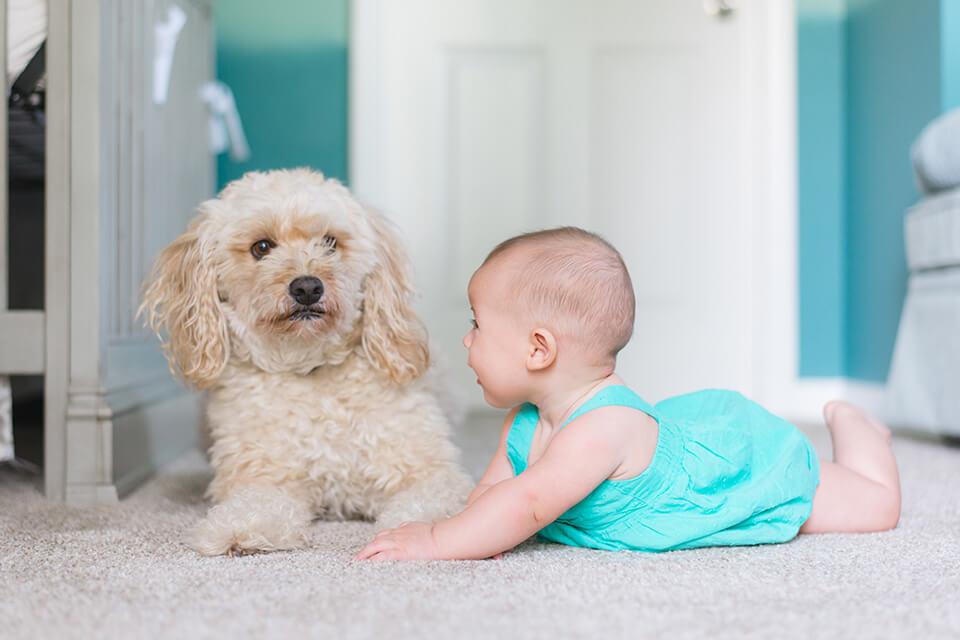 只要是在「床墊超市」購買的床墊,都享有10年至15年的床體結構保固與售後服務,在售後服務方面,最多的案例就是客人來電詢問床墊清洗的問題,因為喝飲料不小心把床墊弄髒弄濕了或是嬰兒吐奶在床墊,以及小孩或寵物尿尿在床墊上,其中又以尿床床墊如何做床墊清洗的問題最多。