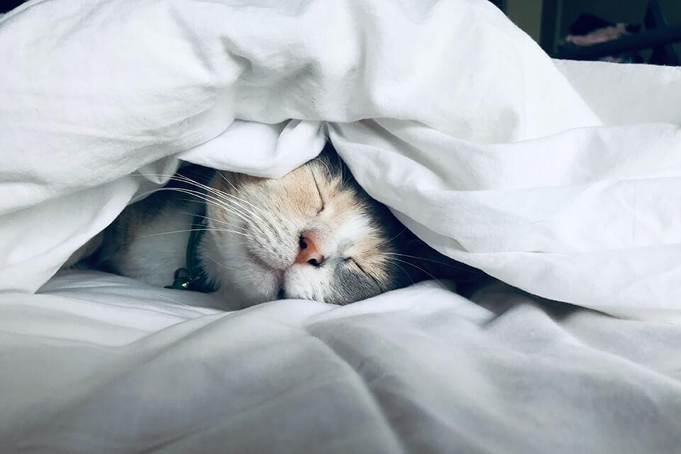 床太軟睡到腰痠背痛?床太軟補救方法在這裡!