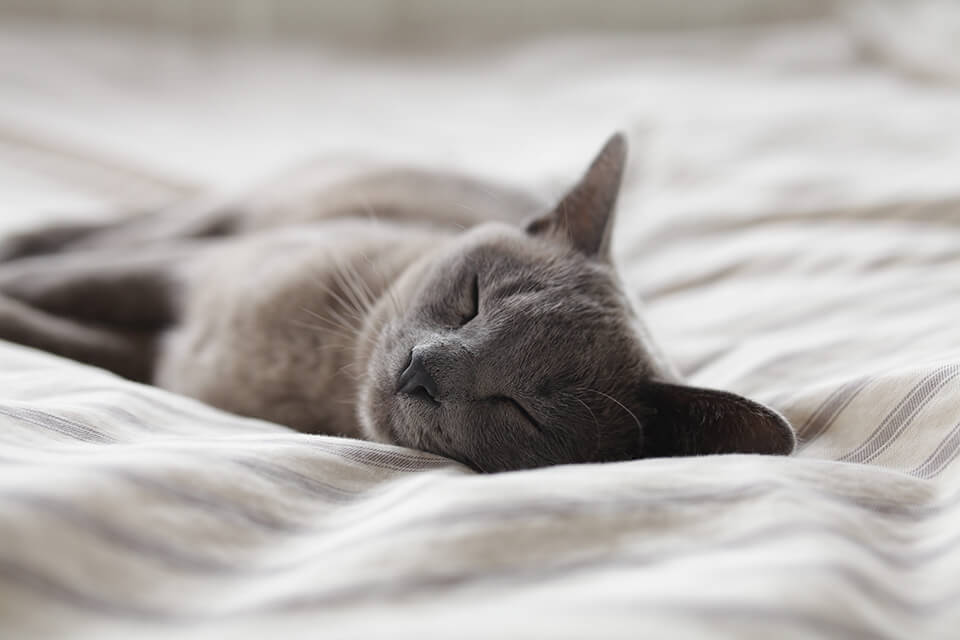 為什麼乳膠床墊單人加大尺寸不一樣?單人加大乳膠床墊尺寸該怎麼選?